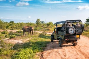 Jeepsafari in Udawalawe National Park