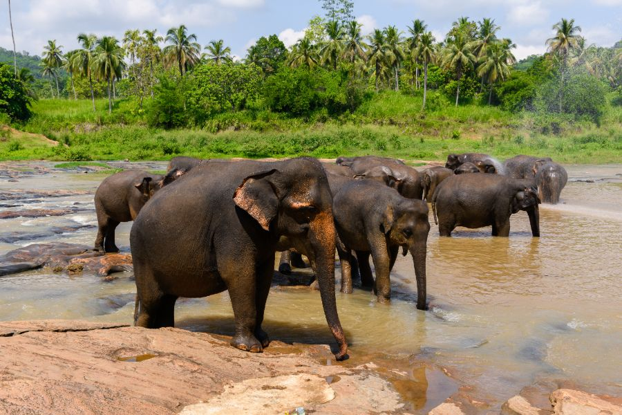 Wilpattu National Park 7